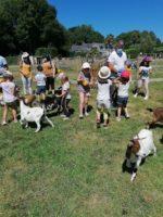Atelier nourrissage des chèvres naines.jpg