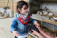 boulbennec-lapins.jpg